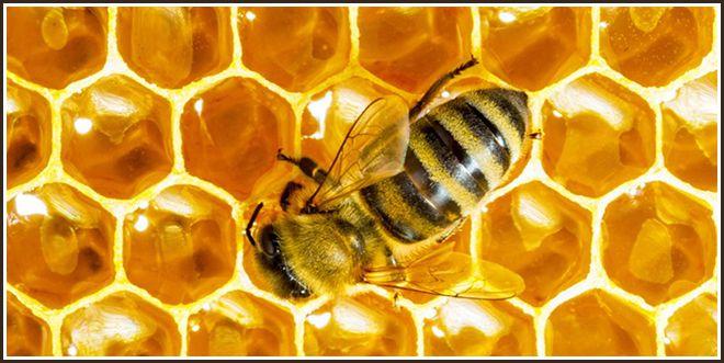 Мед можно при цистите - Лечение цистита