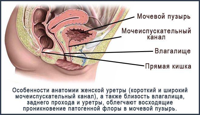 уретра1