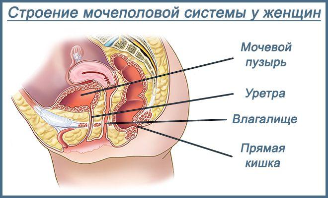 Вирусный цистит: причины, диагностика, симптомы и лечение у женщин ...
