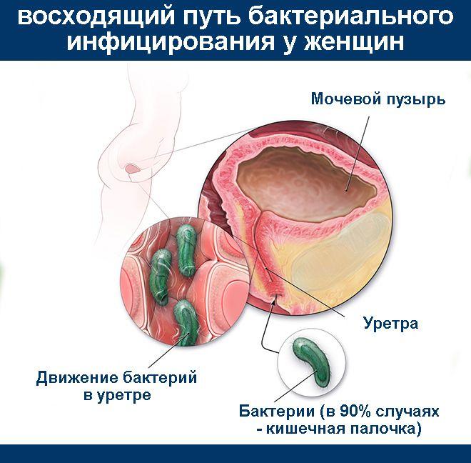Путь бактерий