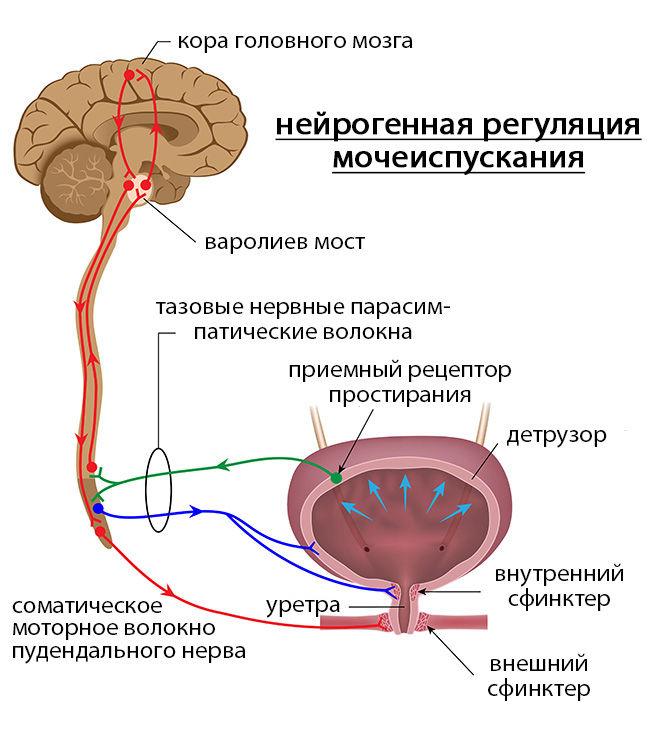 Контроль нервной системы
