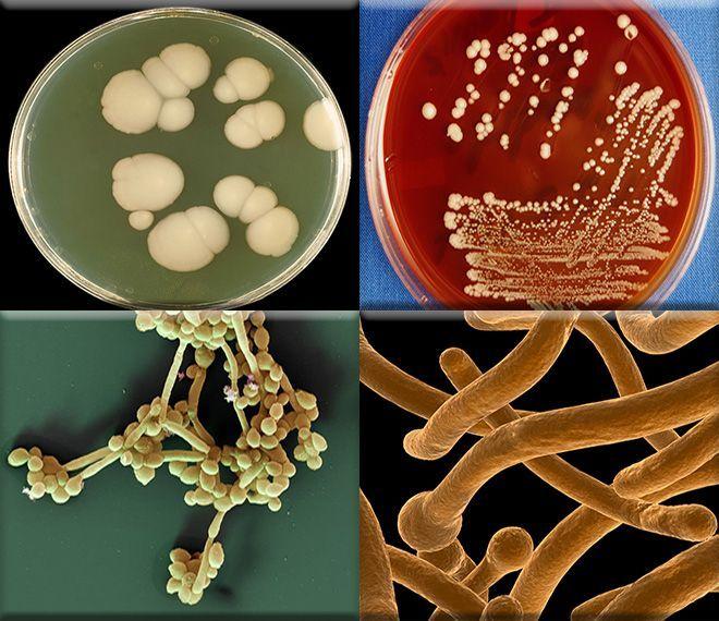 mikroflora